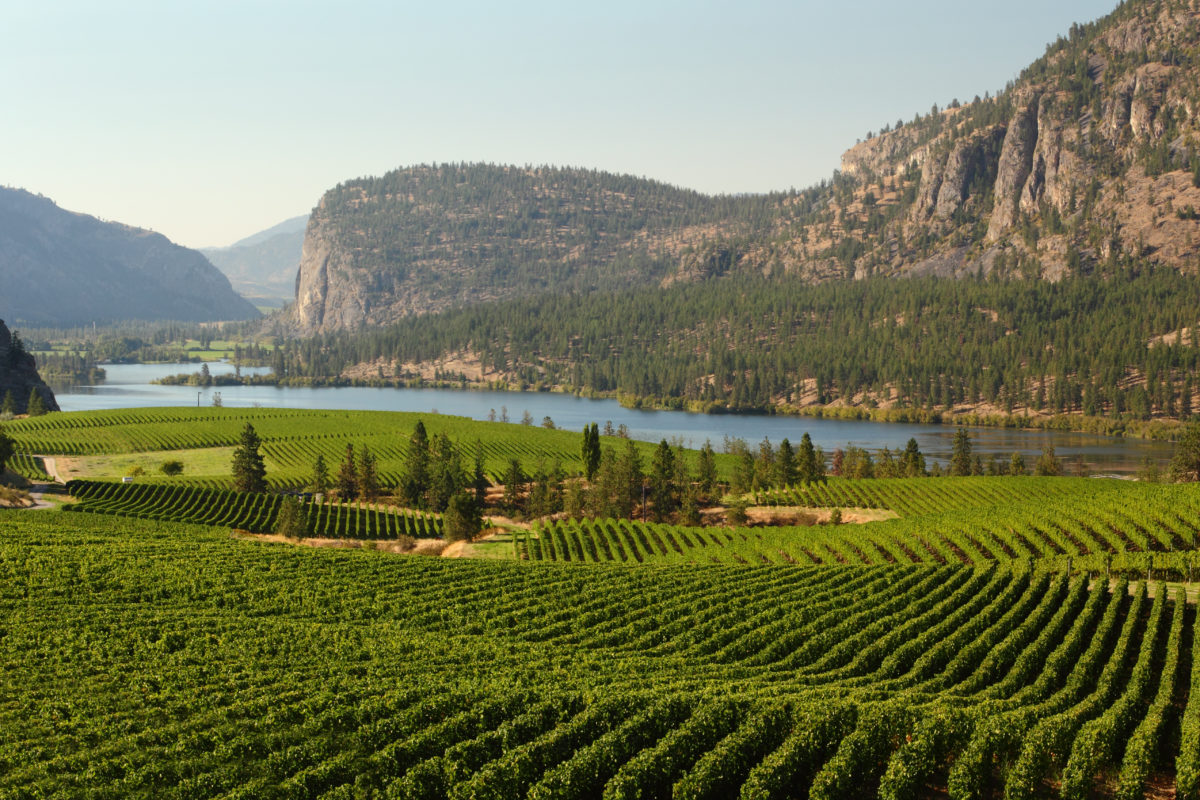 Penticton Vineyards & Wineries